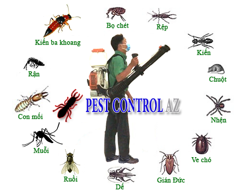 Dịch vụ diệt các loại côn trùng uy tín chuyên nghiệp