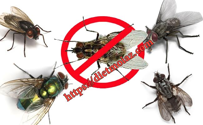 Dịch vụ diệt ruồi hiệu quả nhất