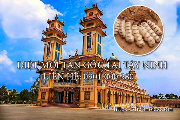Diệt mối tận gốc tại Tây Ninh