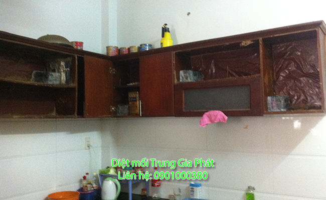 Dịch vụ diệt mối tại LaGi Bình Thuận