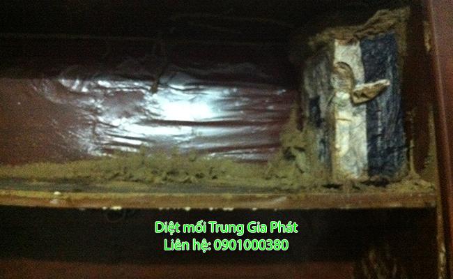 Dịch vụ diệt mối tại Tánh Linh Bình Thuận