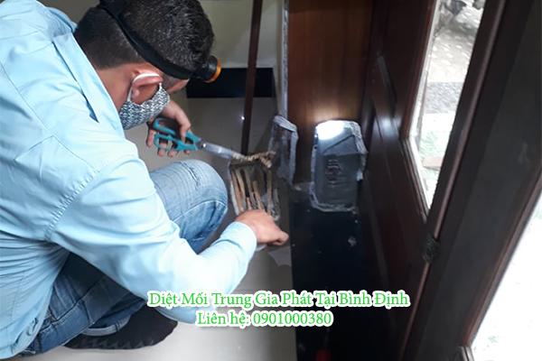 Dịch vụ diệt mối tại Tuy Phước