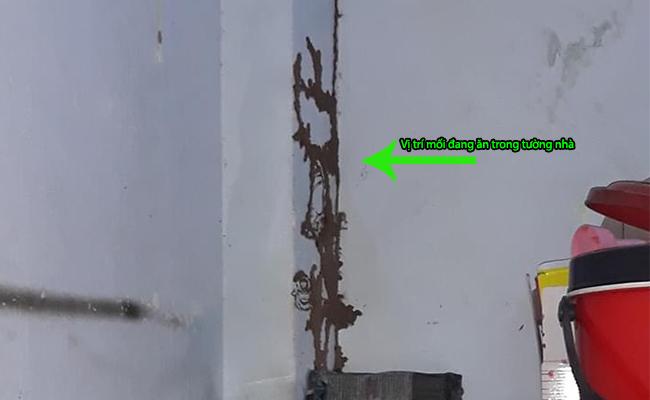 Phương pháp diệt mối tận gốc trong tường nhà
