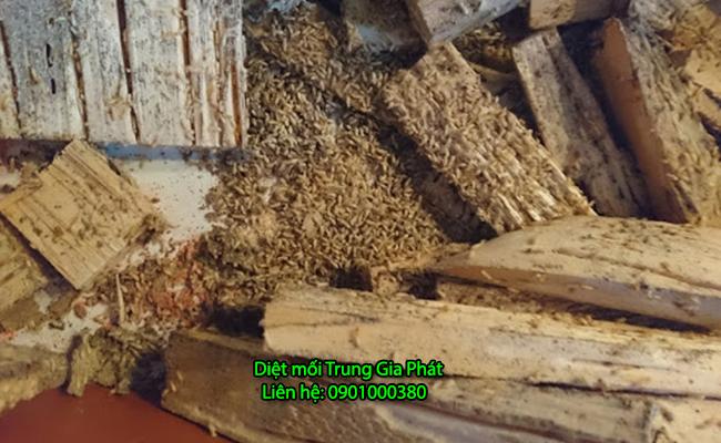 Dịch vụ diệt mối tận gốc tại Lâm Đồng