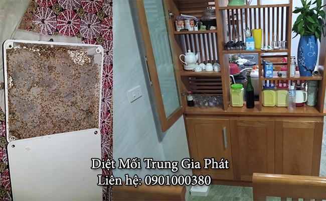 Diệt mối trong tủ bếp tại Nghệ An