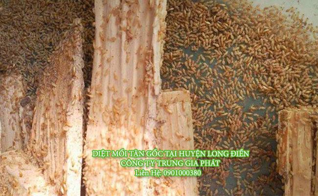 Diệt mối tại huyện Long Điền uy tín