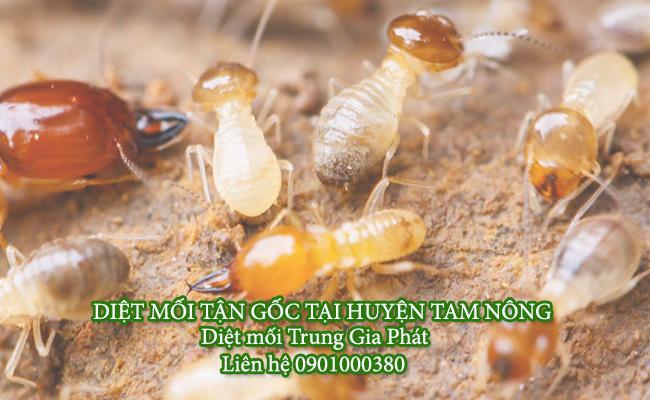 Dịch vụ diệt mối tận gốc huyện Tam Nông Uy tín